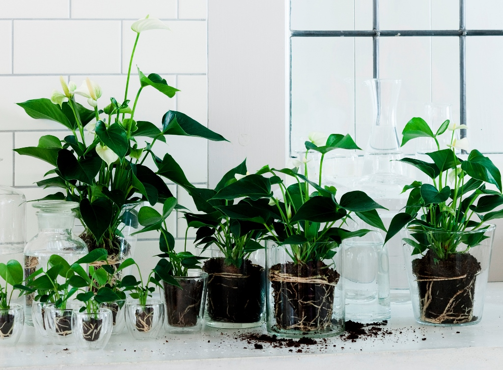 10 stylingideeën met Anthurium