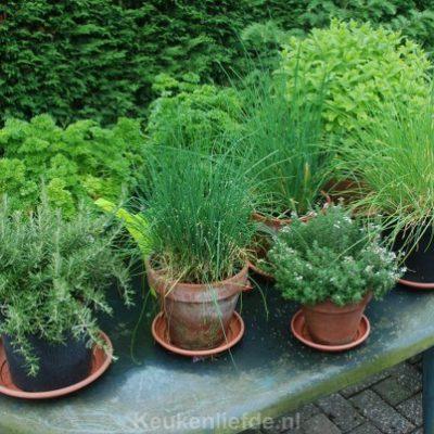 Tuinkruiden uit eigen tuin