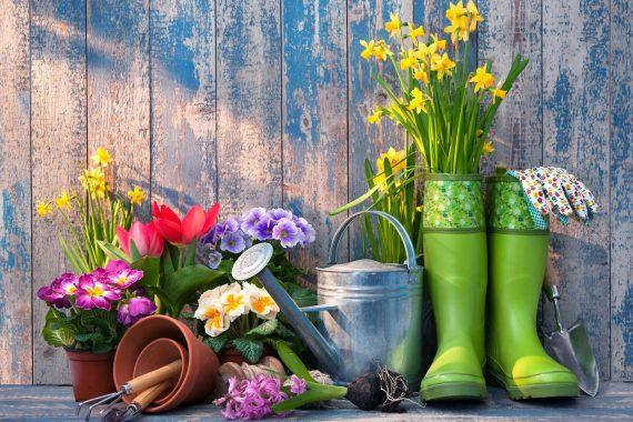 Tips om je tuin zomerklaar te maken!