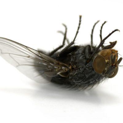 Insecten werende tips! Voor een relaxte zomer.