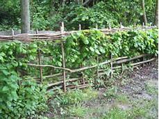 Hangende tuinplanten? Steun ze met een plantensteun!
