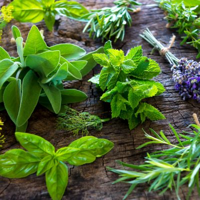 Kruidenplantjes onderhoud binnen