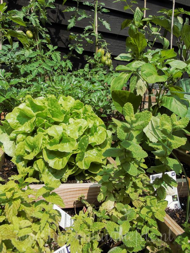 Go green! Kweek je eigen groenten in een moestuinbak